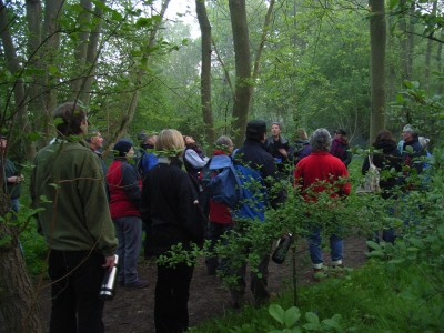 Dawn Walkers in Hillhouse Wood