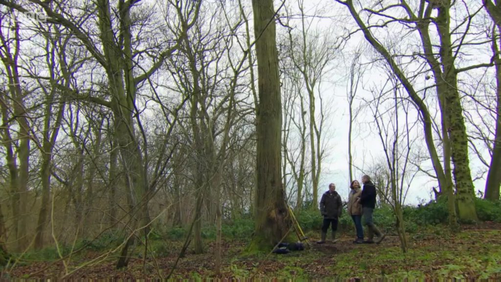 Tom Heap viewing the 'Countryfile Tree' after application of BioChar by Air Sapde to help stave off Ash Dieback